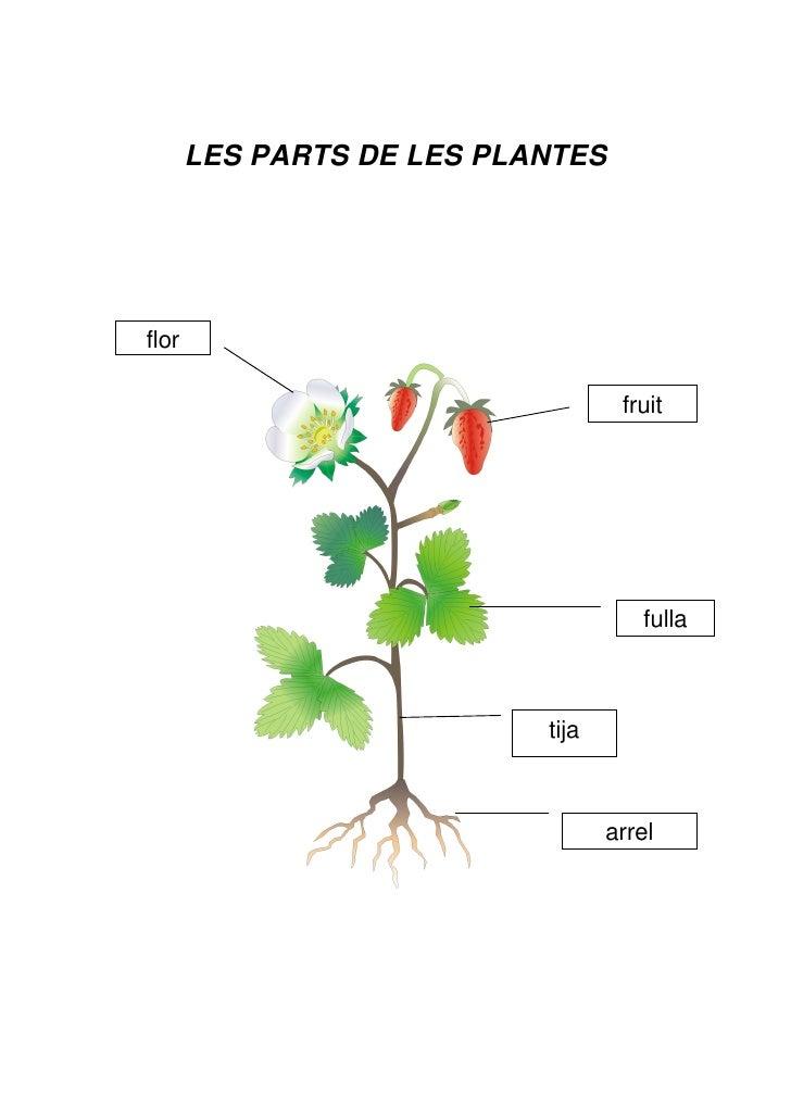 Les plantes parts for Les plantes