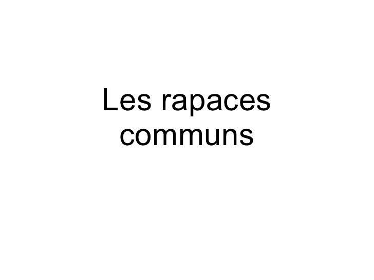 Les rapaces communs