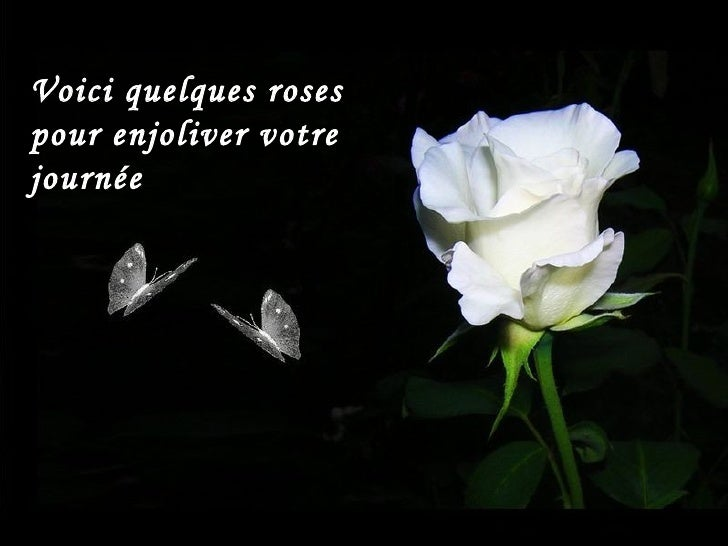 Voici quelques roses  pour enjoliver votre journée