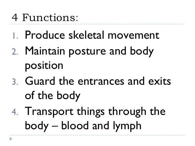 4 Functions:1.   Produce skeletal movement2.   Maintain posture and body     position3.   Guard the entrances and exits   ...