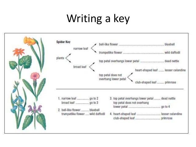 Lesson 6 making biological drawings & using keys