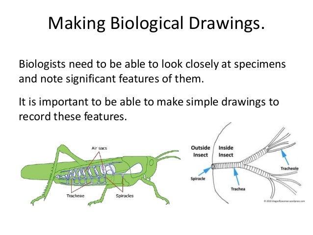 how to make a biological key