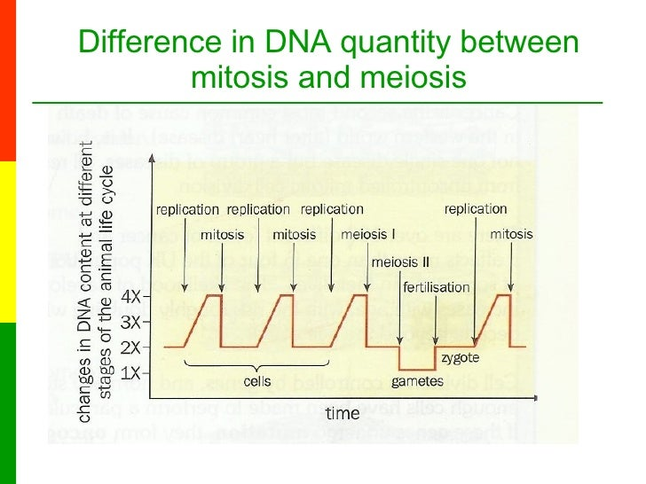 Lesson 6a the stages of meiosis difference in dna quantity between mitosis and meiosis 15 ccuart Gallery