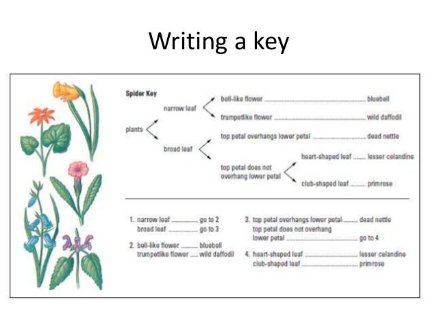 Lesson 7 calculating magnification & dichotomous keys