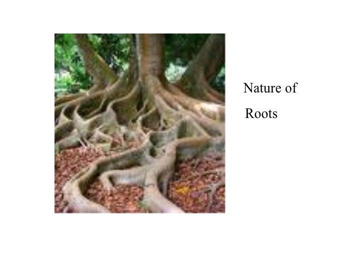 Natureof Roots