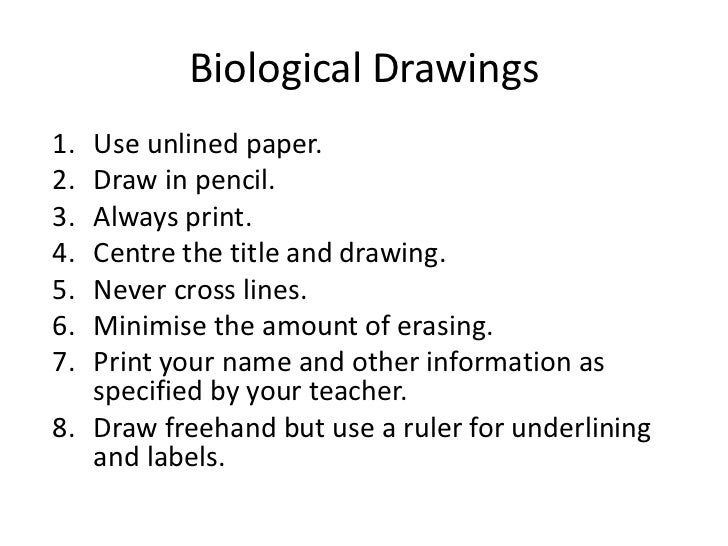 As Lesson 1 Biological Drawings