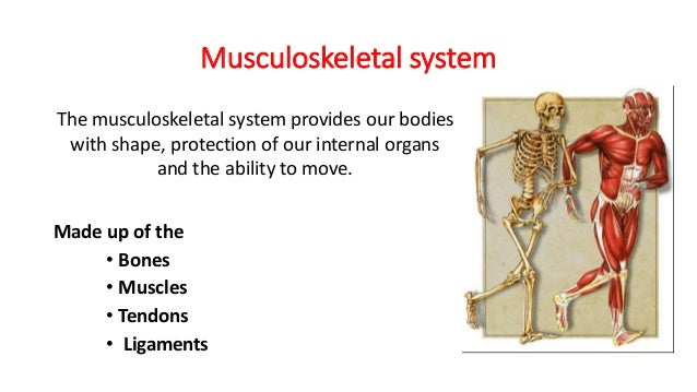 musculoskeletal acute response to exercise Unit 2 acute response to exercise is short term effects that exercise has on the body musculoskeletal response an acute response of the musculoskeletal.