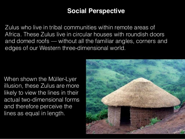 Social Perspective When shown the Müller-Lyer illusion, these Zulus are more likely to view the lines in their actual two-...