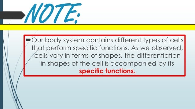 Lesson 10 forms of cells according to shape Slide 2