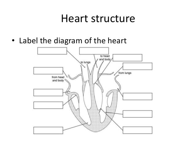 Mrs abrey lesson 12 heart structure heart structure label the diagram of the heart ccuart Image collections