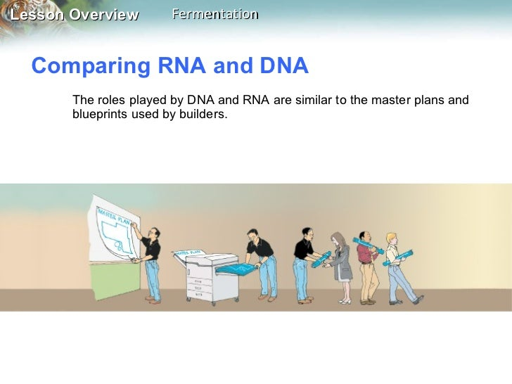 Lesson 131 7 comparing rna and dna malvernweather Image collections