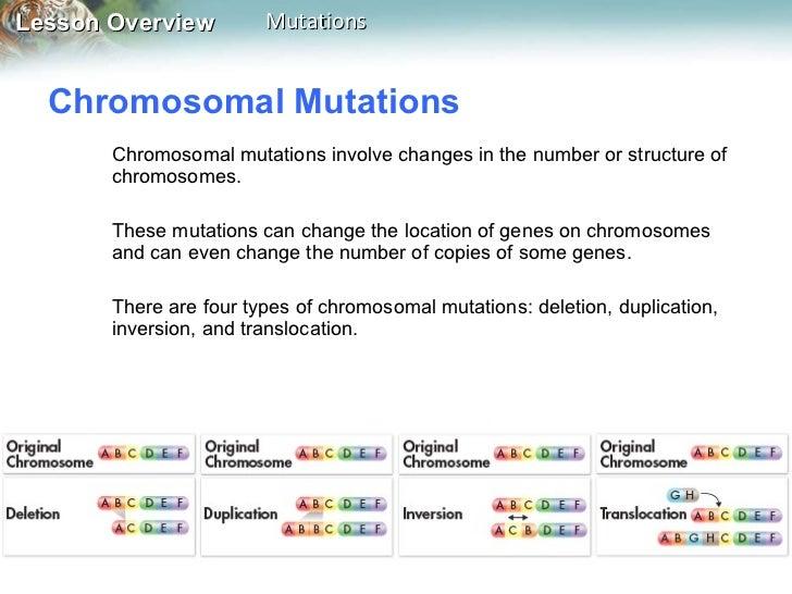 Chromosomal Mutations Worksheet Worksheets For School ...