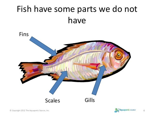 Lesson 14 parts of fish power point for List of fish with fins and scales
