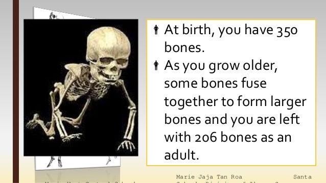 lesson 14 bones and muscles. Black Bedroom Furniture Sets. Home Design Ideas