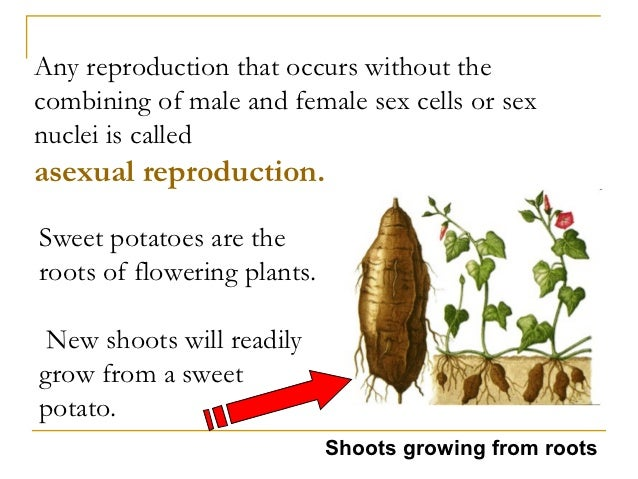 male sex cell in a plant in Idaho