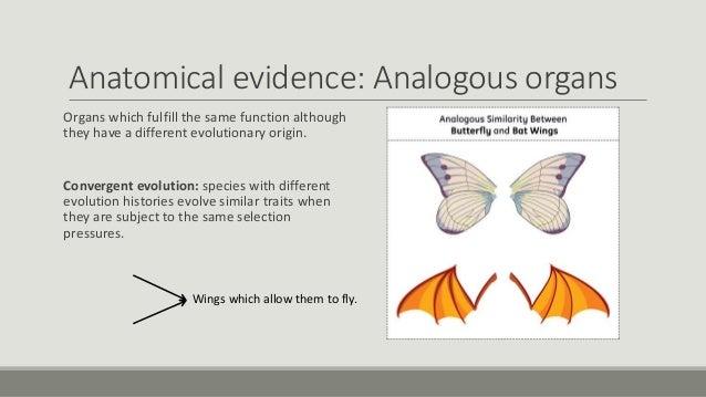 Anatomical Evidence For Evolution Worksheet anatomical evidence – Evidence of Evolution Worksheet