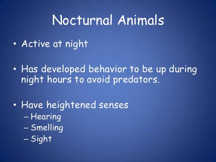 Nocturnal Animals<br />Active at night<br />Has developed behavior to be up during night hours to avoid predators.<br />Ha...