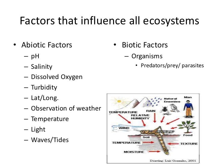 a definition of ecosystem and the factors influencing ecosystems The following video covers the biotic and abiotic factors that influence most ecosystems and the diversity of consumers also affect an entire ecosystem influencing factors abiotic vs biotic diffencom diffen llc, nd web 15 apr 2018.