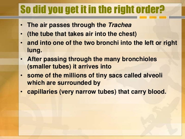 So did you get it in the right order?• The air passes through the Trachea• (the tube that takes air into the chest)• and i...