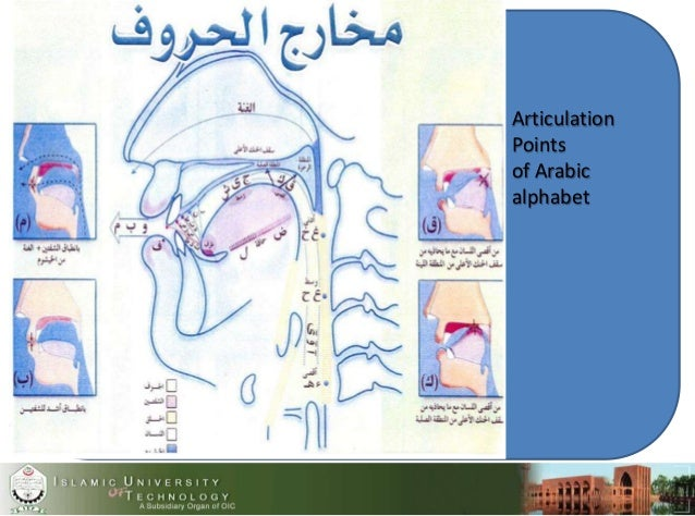 . Articulation Points of Arabic alphabet