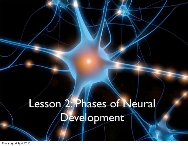 PHASES OF NEURAL DEVELOPMENT IN                             LEARNING                    Lesson 2: Phases of Neural        ...