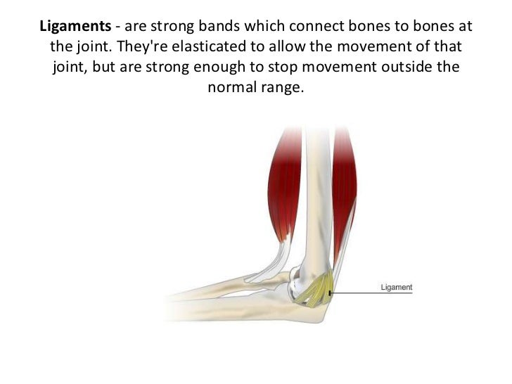 Lesson 2 Tendons Ligaments Cartilage And Joints