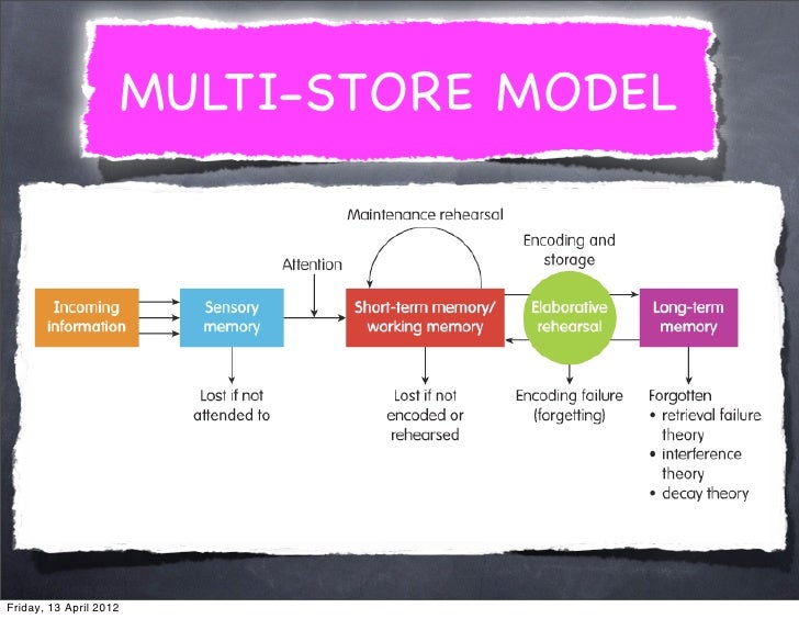 the multi store model atkinson and Strengths and weaknesses: multi store model memory watch announcements £75 amazon vouchers up for grabs help us test our new tool  revising) therefore, the role of rehearsal as a means of transferring from stm to ltm is much less important than atkinson and shiffrin (1968) claimed in their model  themulti store modelhas been.