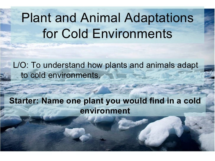 Lesson 2 Gcse Cold Adaptations