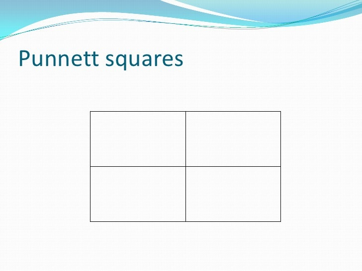 punnett square visual lab Essays - largest database of quality sample essays and research papers on virtual lab punnett squares.