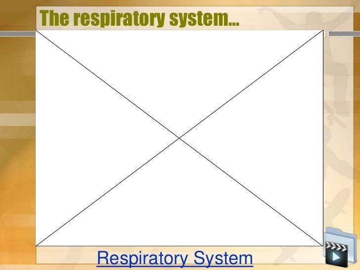 The respiratory system…      Respiratory System