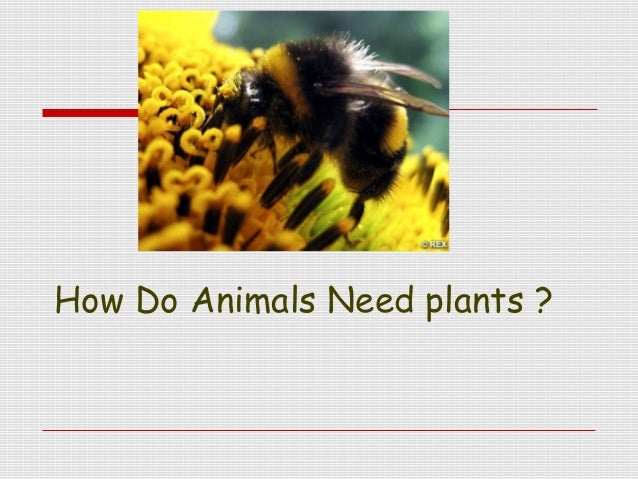 How Do Animals Need plants ?