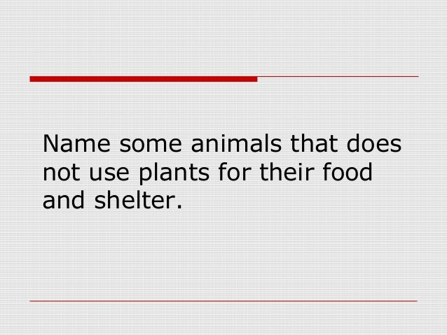 Animals need plants for What do we use trees for