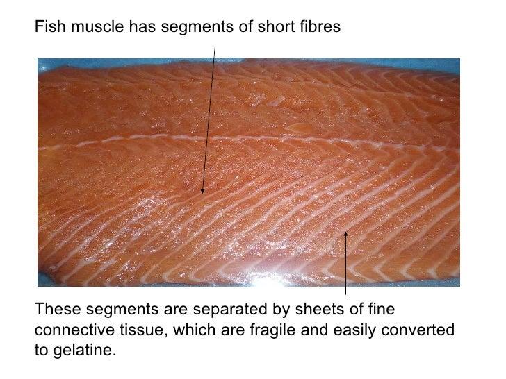Protein; fish Slide 3