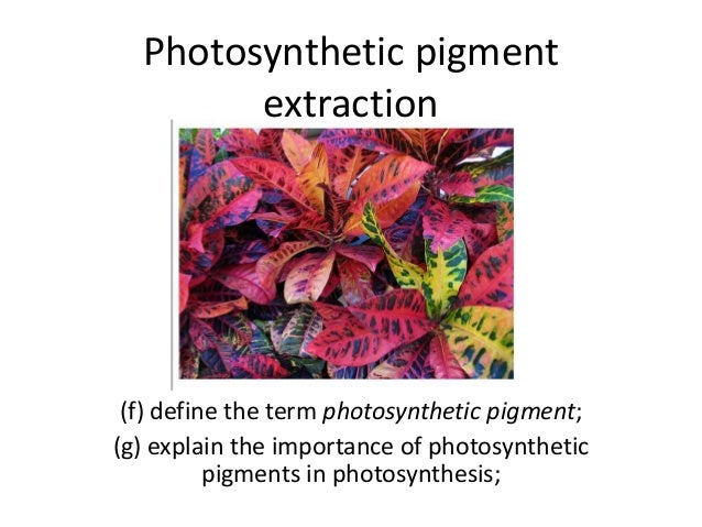 extraction of plant pigment The four main pigment components of plant leaves are chlorophyll a, chlorophyll b, carotene, and xanthophyll the solvents needed for the extraction and separation will be petroleum ether, diethyl ether,.