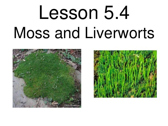 Lesson 5.4Moss and Liverworts