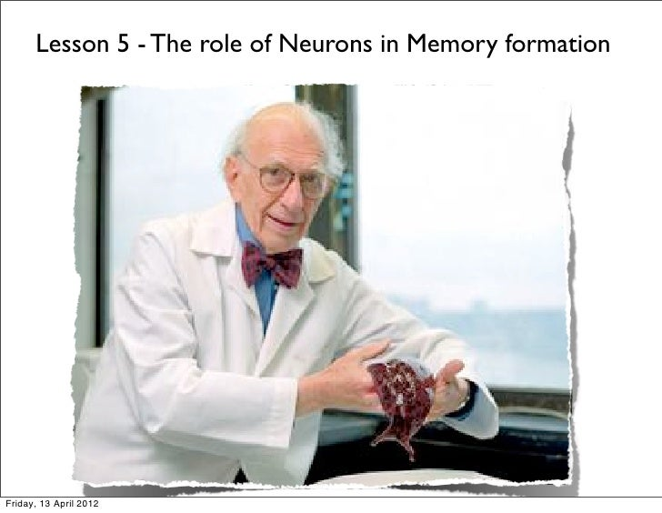 Lesson 5 - The role of Neurons in Memory formationFriday, 13 April 2012