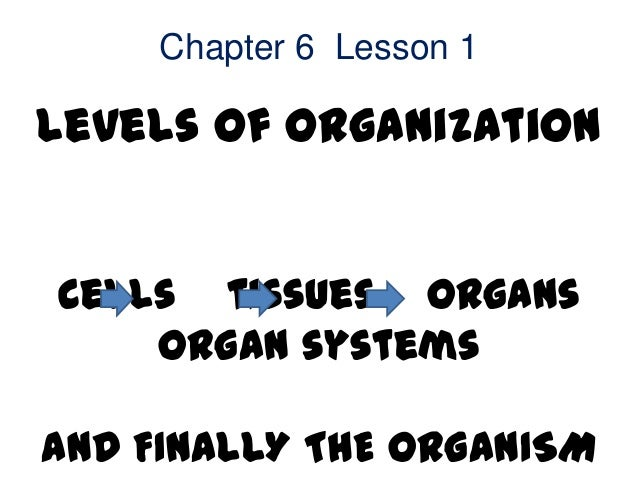Chapter 6 Lesson 1Levels of OrganizationCells tissues organs    organ systemsAND FINALLY THE ORGANISM
