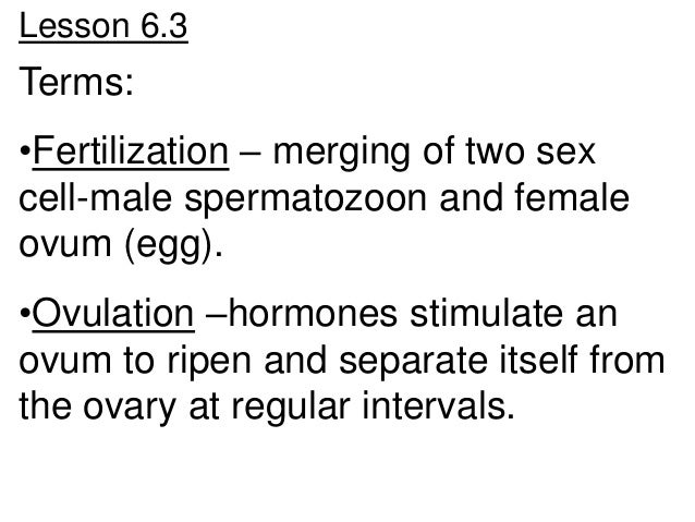 Lesson 6.3Terms:•Fertilization – merging of two sexcell-male spermatozoon and femaleovum (egg).•Ovulation –hormones stimul...