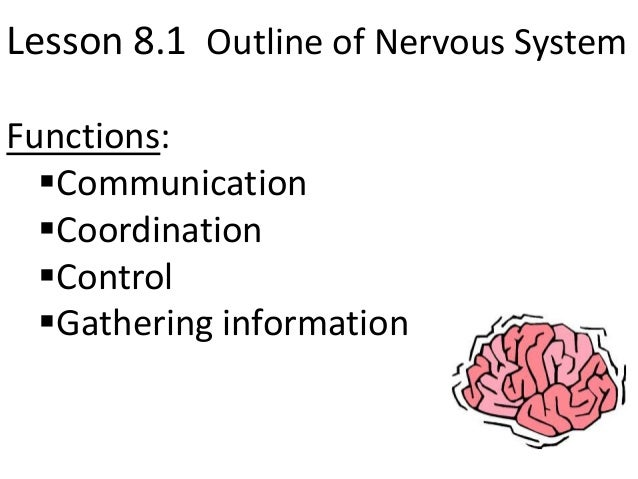 Lesson 8.1 Outline of Nervous SystemFunctions:  Communication  Coordination  Control  Gathering information