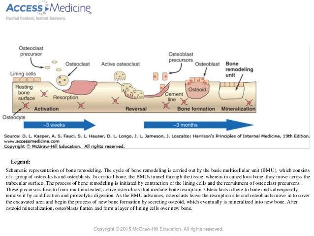 Bone Tissue Metabolism