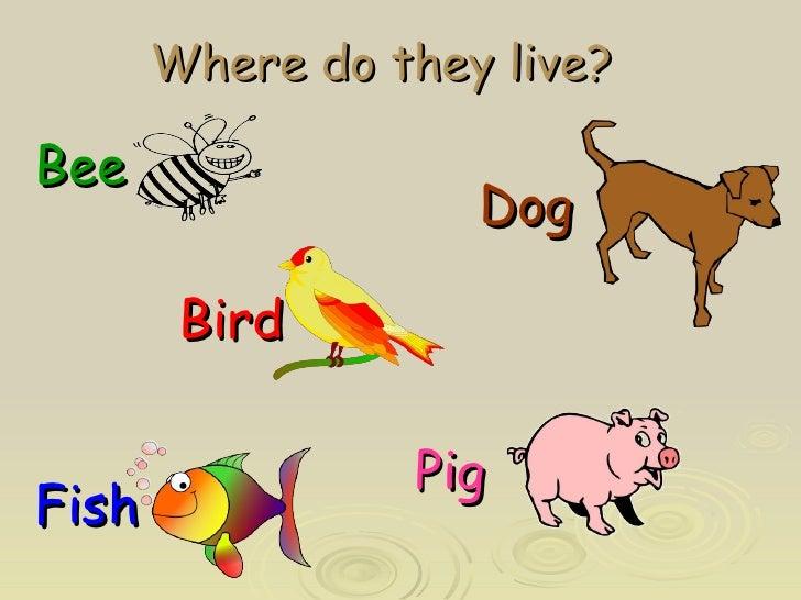 Where do they live? <ul><li>Bee   </li></ul><ul><li>  </li></ul><ul><li>  Bird </li></ul><ul><li>Fish </li></ul><ul><li>Do...
