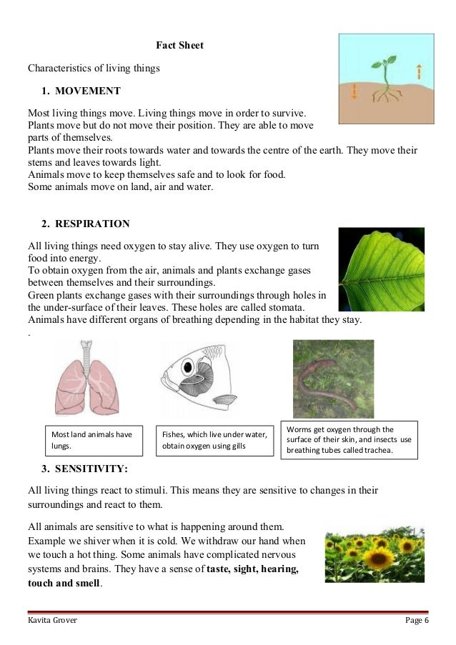 Printables Characteristics Of Living Things Worksheet lesson plan and worksheets on characteristics of living lhings kavita grover page 5 6 fact sheetcharacteristics living