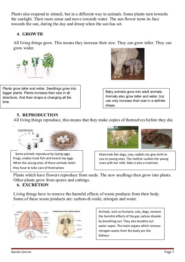 Lesson Plan And Worksheets On Characteristics Of Living Things on Sunlight Worksheet Kindergarten