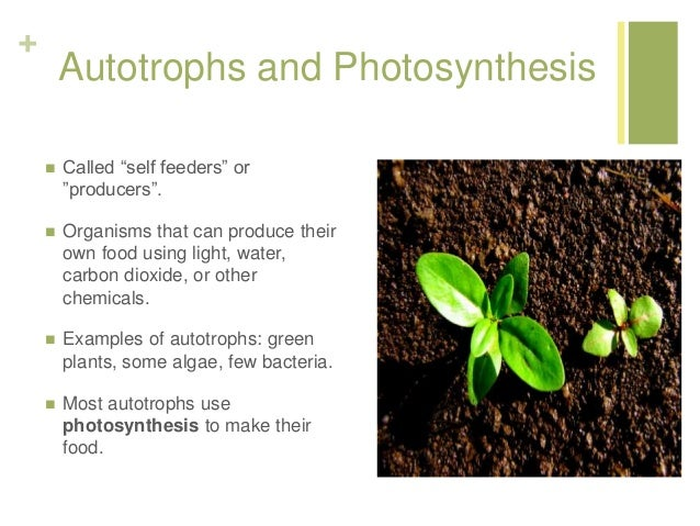 Photosynthesis Lecture For Lesson 1