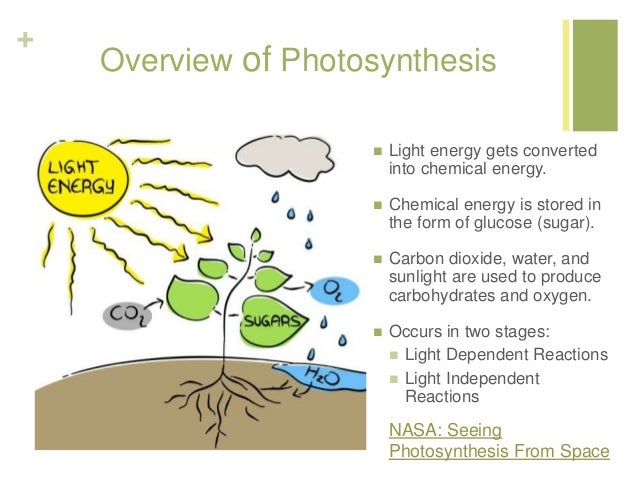 Intro to photosynthesis