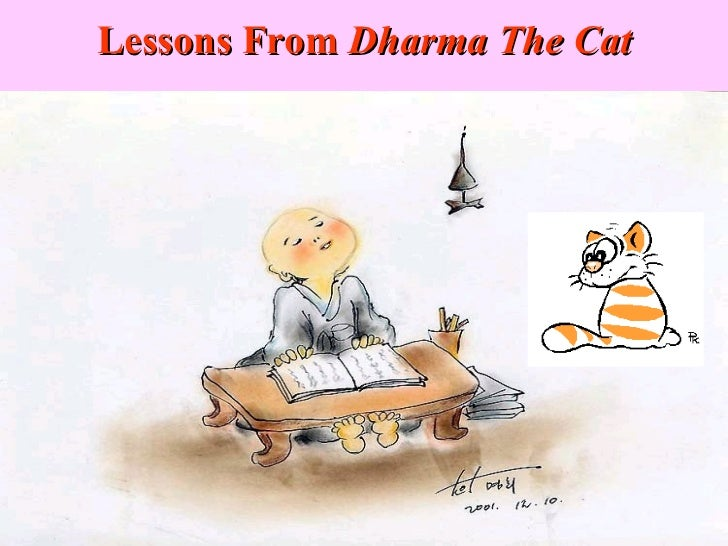 Lessons From  Dharma The Cat