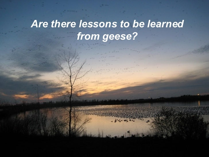 Are there lessons to be learned from geese?