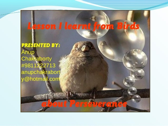Lesson I learnt from Birdsabout PerseverancePRESENTED BY:AnupChakraborty#9811222713anupchakraborty@hotmail.com