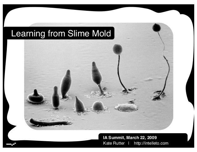 Lessons from Slime Mold | March 2009 | 1! Learning from Slime Mold! IA Summit, March 22, 2009! Kate Rutter | http://intell...
