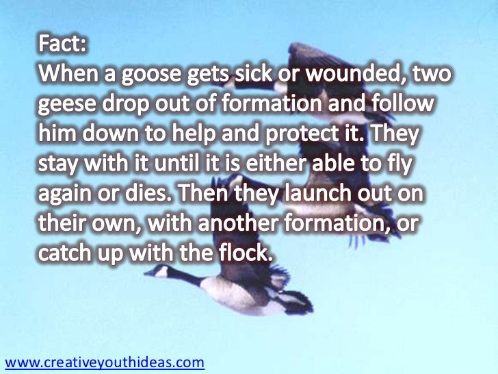 lessons from geese Lessons from geese principle is a great illustration of the importance of team work and empowering force or collaboration during this teambuilding session, we discuss five key lessons/principles and application of them in personal and business life.